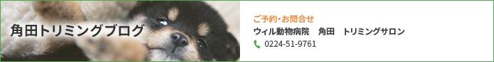 角田トリミングブログ