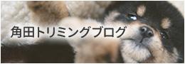 角田トリミング ブログ